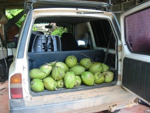 Our coconut stash
