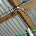 golden orb portland roads shed - pic 4