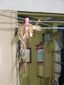 Sunbirds nest Wed Nov 3rd