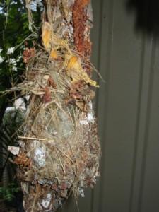 Closeup of Original Nest