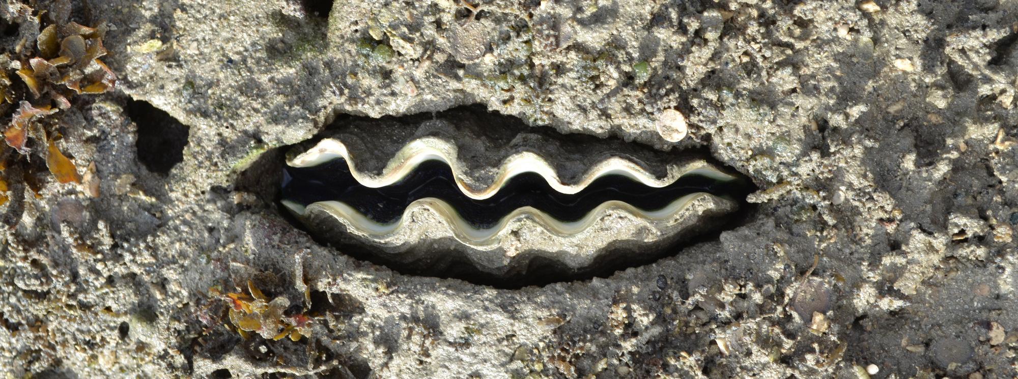 clam-slider